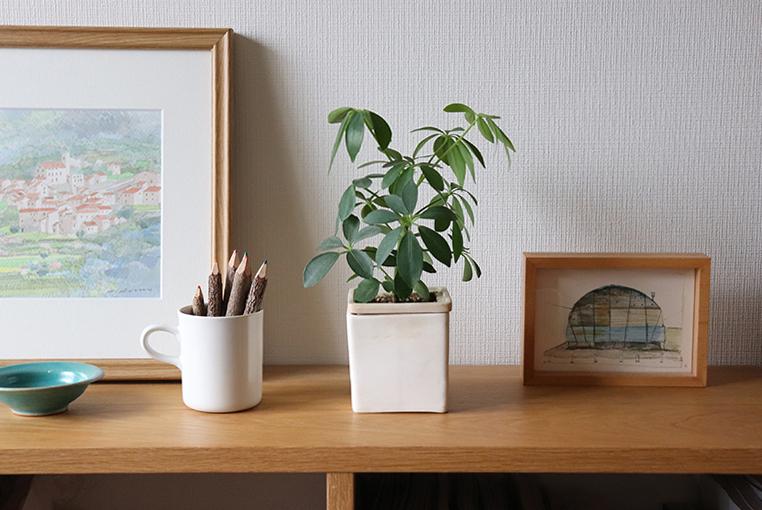 パセリ植木鉢