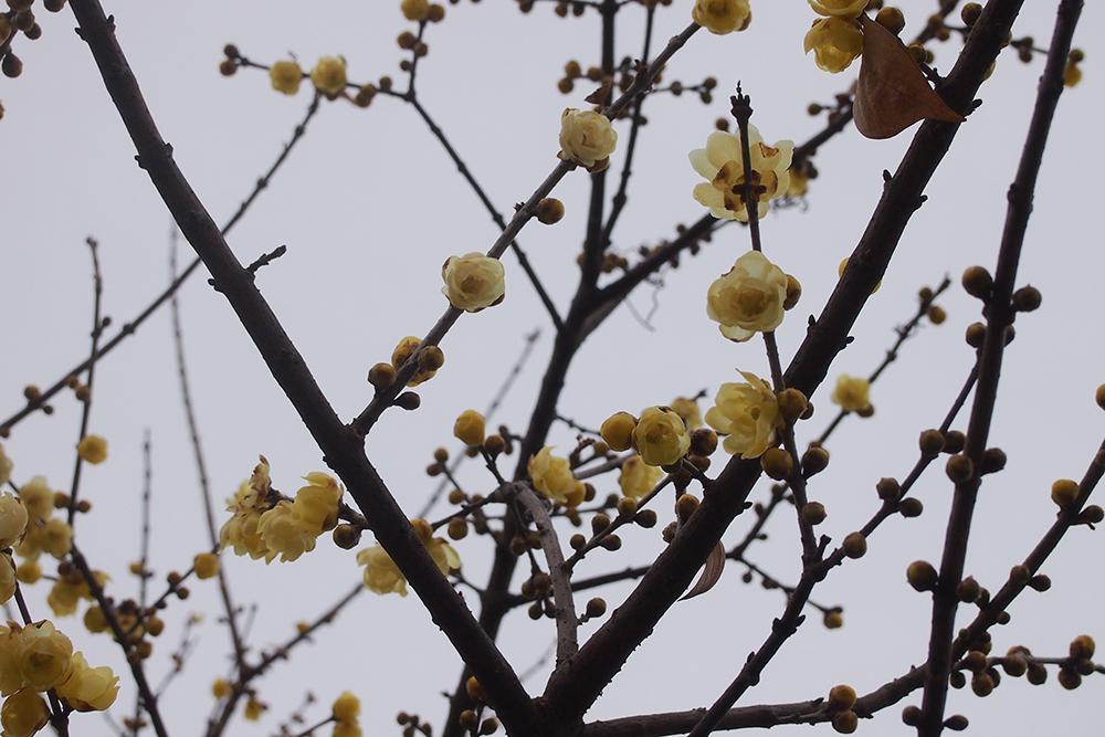 Feb.4